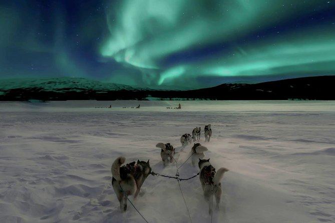 northern light husky tour